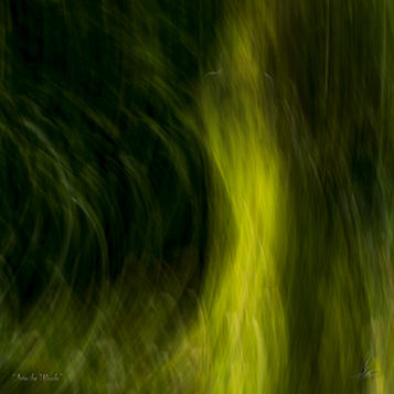 INTO THE WOODS Once at peace with what lies behind us we stand in anticipation of that what yet has to come. -Limited Photographic Art by Loek van Walsem -